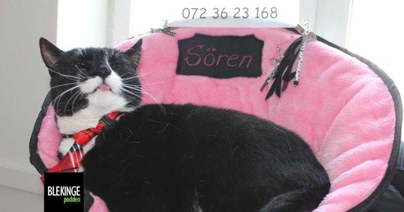 Katten Sören räddar hemlösa katter